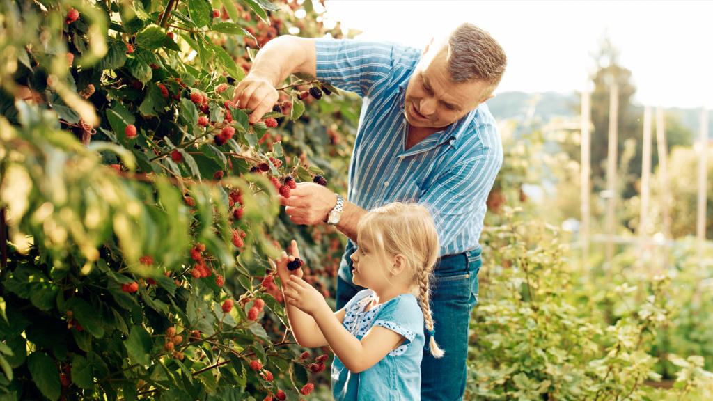 Where to go berry picking in Australia - The NEFF Kitchen